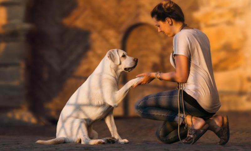 Se o seu cão é surdo, como educá-lo?